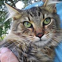 Adopt A Pet :: Echo - Germantown, MD
