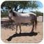 Photo 1 - Quarterhorse Mix for adoption in Green Valley, Arizona - Carlie
