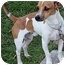 Photo 1 - Jack Russell Terrier Mix Dog for adoption in Owatonna, Minnesota - Sonny