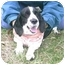 Photo 2 - Cocker Spaniel Dog for adoption in cedar grove, Indiana - Sophia