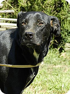 Labrador Retriever Mix Dog for adoption in Centerville, Tennessee - Emily