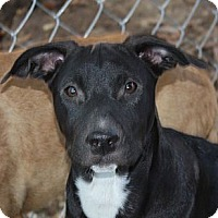 Adopt A Pet :: Bennett - PENDING, in Maine - kennebunkport, ME