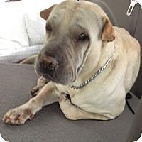 Adopt A Pet :: Charlie - Gainesville, FL