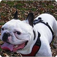 Adopt A Pet :: BUBBA - Warren, NJ