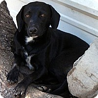 Adopt A Pet :: Shy - Glenpool, OK
