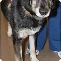 Adopt A Pet :: Navajo - Gilbert, AZ