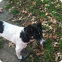 Adopt A Pet :: Turk - Hixson, TN