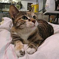 Adopt A Pet :: Tidbit - Geneseo, IL