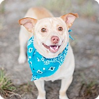Adopt A Pet :: Piglet - Kingwood, TX
