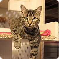 Adopt A Pet :: Wren - Carlisle, PA