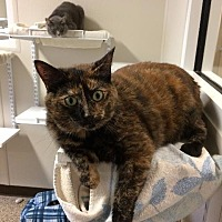 Adopt A Pet :: Molly - Fremont, OH