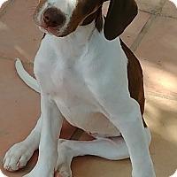 Adopt A Pet :: Peggy Sue - Surprise, AZ