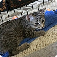 Adopt A Pet :: Lil'Buttercup - Carlisle, PA