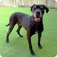 Adopt A Pet :: LEGEND - Raleigh, NC