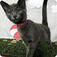 Adopt A Pet :: Snap - Lloydminster, AB