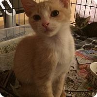 Adopt A Pet :: Leo - Burbank, CA