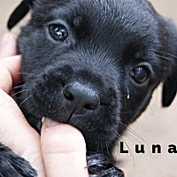 Adopt A Pet :: Luna - Dallas, TX