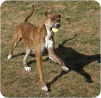 Shepherd (Unknown Type) Mix Dog for adoption in Meridian, Idaho - Sweet Pea