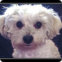 Adopt A Pet :: Fluffy - Fort Braff, CA