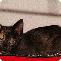 Adopt A Pet :: Carley - Spotsylvania, VA