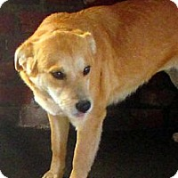 Adopt A Pet :: ADELE - Glastonbury, CT