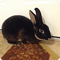 Adopt A Pet :: Cadbury - Portland, ME