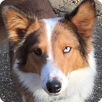 Adopt A Pet :: Chelsea - North Little Rock, AR