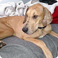 Adopt A Pet :: Sophia - Manassas, VA