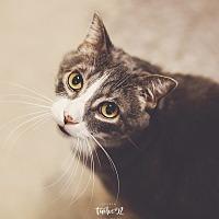 Adopt A Pet :: Grady - New Richmond,, WI