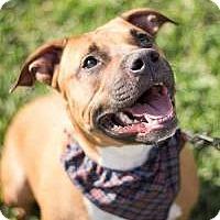 Adopt A Pet :: Tucker - New Smyrna Beach, FL