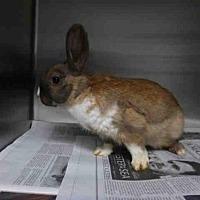 Adopt A Pet :: A1680894 - Los Angeles, CA