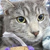 Adopt A Pet :: Squeekers - Castro Valley, CA