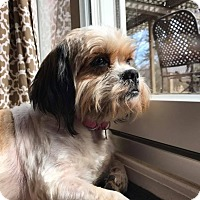 Adopt A Pet :: Flora - Troy, MI
