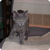 Adopt A Pet :: Avery - Fort Wayne, IN