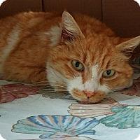 Adopt A Pet :: Chester - Colmar, PA