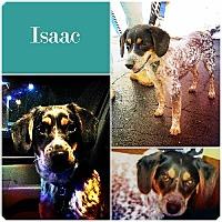 Adopt A Pet :: Isaac Adopt. Pend - Ontario, ON