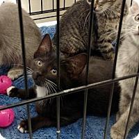 Adopt A Pet :: Sparkles/RV - White Bluff, TN