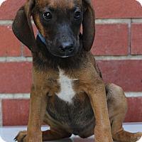 Adopt A Pet :: Carlos - Waldorf, MD