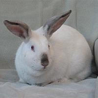 Adopt A Pet :: Daphne - Santa Rosa, CA