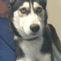 Adopt A Pet :: 155861 - Bakersfield, CA