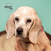 Adopt A Pet :: Dora - Cincinnati, OH