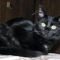 Adopt A Pet :: Toodles - Rutledge, TN