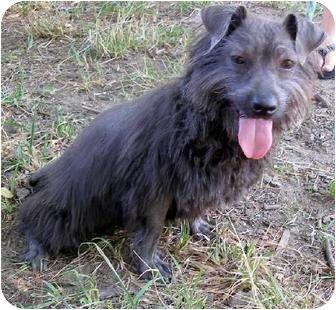 Terrier (Unknown Type, Medium) Dog for adoption in Ozone Park, New York - Tramp
