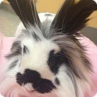 Adopt A Pet :: Petey - Portland, ME