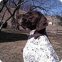 Adopt A Pet :: Reilly - Leesport, PA