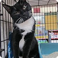 Adopt A Pet :: Scats - Riverhead, NY