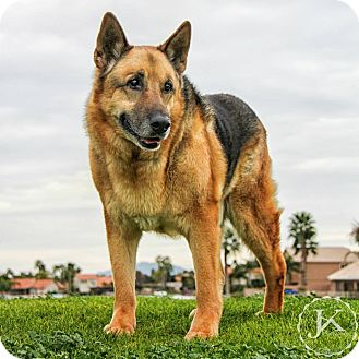 German Shepherd Dog Dog for adoption in Mesa, Arizona - Grampy