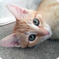 Adopt A Pet :: Princess - Irvine, CA