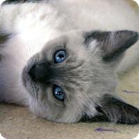 Adopt A Pet :: Bach - Davis, CA