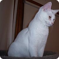 Adopt A Pet :: Brie - Richmond, VA
